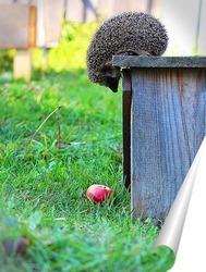 Постер Ёжик и яблоко