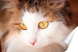 Постер красивая кошка