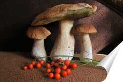 Постер белые грибы