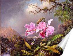 Постер Исследование Орхидеи