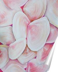 Постер Перламутровые, розовые, морские ракушки