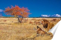 Постер Лев и львица