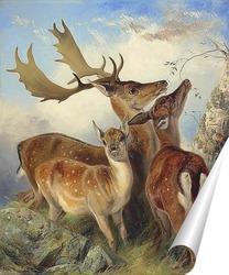 Постер Лань