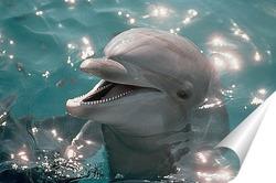 Постер Dolphin115