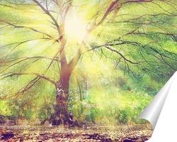 Постер Дерево на рассвете