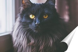 Постер Портрет черной кошки