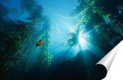 Постер Algae040