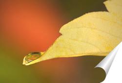 Постер Лист дерева с каплей росы