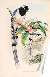 Постер Птицы Азии