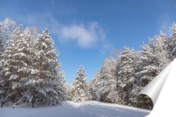Постер Утро в зимнем сосновом лесу