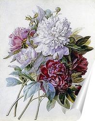 Постер Букет с красными, белыми и розовыми пионами