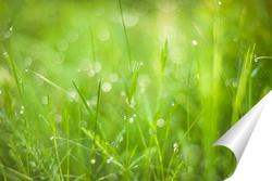 Постер Зеленая трава на луговом поле