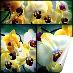 Постер Коллаж. Орхидеи