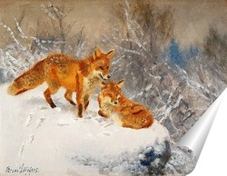 Постер Две лисы в зимний пейзаж