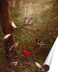 Постер Лесные птицы