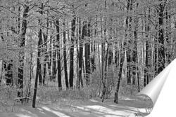Дерево жизни / Tree of Life