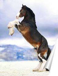 Постер Величие лошади