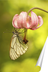 Постер Бабочка на цветке лилии