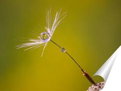 Постер Семя одуванчика с каплей росы