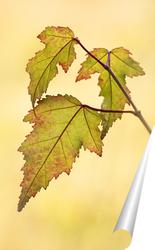 Постер Кленовые листья
