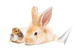 Постер Кролик и цыплёнок