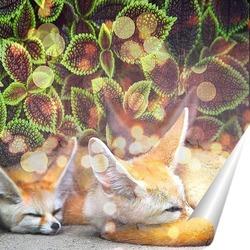 Постер Спящие лисички