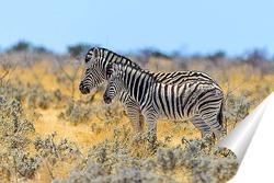 Постер Зебра с детенышем в дикой природе