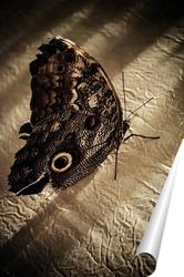 Постер Тропическая бабочка