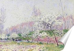 Постер Яблоки в цвету