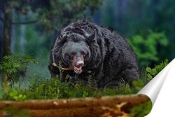 Постер Медведь в лесу