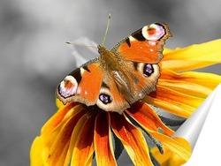 Постер Бабочка на желтом