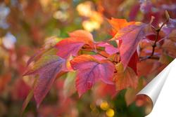 Постер Осенняя красота