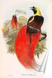 Постер Райские птицы