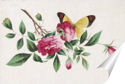 Постер Бабочка и пионы