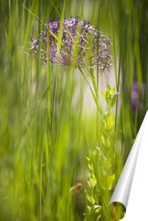 Постер луговая трава