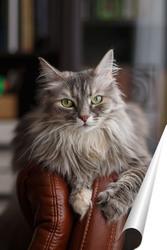 Постер Кошка Дымка