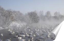 Постер Лебеди на озере на Алтае