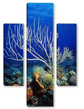 Модульная картина Coral005