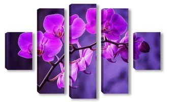 Модульная картина Ветка орхидеи Золушка