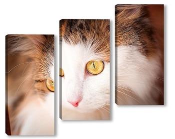 Модульная картина красивая кошка