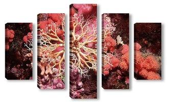 Модульная картина Coral009