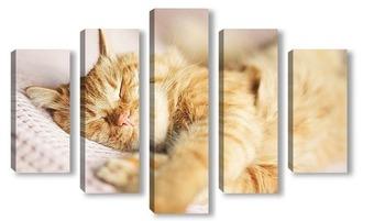Модульная картина Спящий кот породы Мейн-Кун