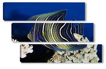 Модульная картина Fish038