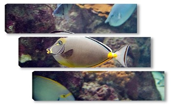Модульная картина Fish141