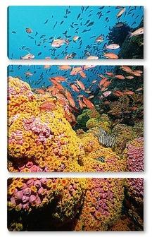 Модульная картина Coral058