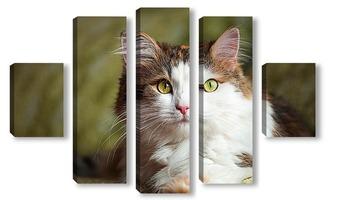 Модульная картина Кошка с зелеными глазами