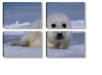 Модульная картина Seal012