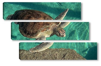 Модульная картина Turtle014