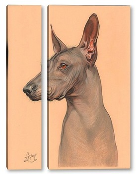 Модульная картина Голая мексиканская собака