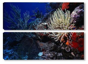 Модульная картина Coral013